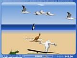 Выберите самую сильную и быструю птицу, которая сможет отнести пингвина на наибольшее расстояние.