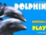 Дельфины очень игривые животные. Им очень нравится перепрыгивать через кольца. Но дикие акулы мешают дельфину развлекаться. Используй пробел, что бы дельфин разогнался, и стрелочки для прыжков и ныряния. Помоги дельфину перепрыгнуть через кольца, которые расположены над уровнем моря, и обходить стороной кровожадных акул. Мелкая рыбешка прибавит немного времени.