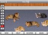 На полу лежат коты, которых надо тыкать пальцем, чтобы разбудить. Эти самые коты выбрасывают всяческие бонусы, которые ловятся курсором мышки. Однако не переусердствуйте, чтоб не поцарапали когтями!