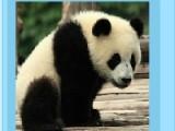 На ваш выбор предоставляются три картинки с изображением панды. После выбора картинки выберите сложность, и на сколько кусочков разлетится Ваш пазл. И начинайте получать удовольствие от процесса игры.