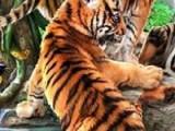 Перед Вами пазл на котором изображены забавные тигрята. внимательно посмотрите на картинку и запомните ее. Выберите уровень сложности и попытайтесь собрать из рассыпавшихся кусочков пазла изображение, которое только что видели.