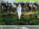 Отправьтесь на рыбалку не вызодя из дома вместе с игрой Рыбалка на озерах 3. В данной игре на Ваш выбор будет несколько мест для ловли, а разнообразие рыб удивит Вас.