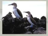 Выберите одну из понравившихся фотографий с птицами и морем. После этого выберите сложность уровня. После того как пазл рассыпется на кусочки постарайтесь восстановить фотографию за минимальное время.