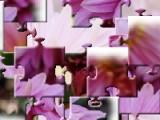 Если расположить все кусочки перепутавшегося пазла правильно Вы сможете увидеть фото великолепного розового цветка.