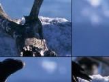 Переставьте кусочки пятнашек так, что бы получилось красивое изображение с гордыми птицами орлами!