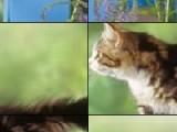 Попробуйте за ограниченное время поставить все кусочки картинки на свое место. Если у вас это выйдет то вы получите отличное изображение котенка на заборе.
