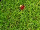 Очень тяжело муравью выжить среди вражеского муравейника. Но именно это и является Вашей задачей. Чем дольше муравей будет жив тем лучше.