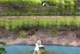 Теперь Yeti вышел на охоту. Держа в лапах ламу, он стреляет по пингвинам.