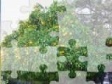 Перед Вами игра,которая представляет собой не сложный пазл. Соберите все кусочки мозаики правильно, что бы получилась картинка с изображением апельсинового дерева.
