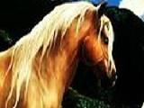 Вашему вниманию представлено изображение на котором нарисованы Фантастические лошади. На рисунке тщательно замаскированы цифры. Найдите их за минимальное время!