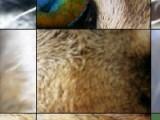 Что бы получить изображение кота Вам необходимо расставить все кусочки пятнашек на свои места. Но поторопитесь! Время у вас ограничено!